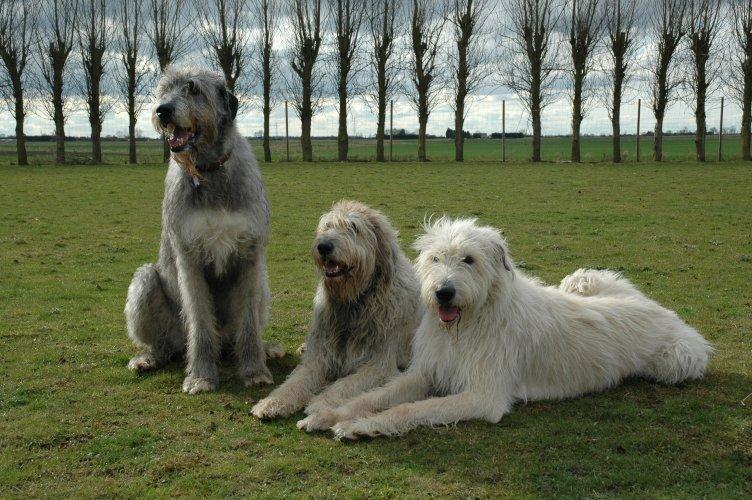 Fergus with his housemates Rafferty & Dempsey (sitting)