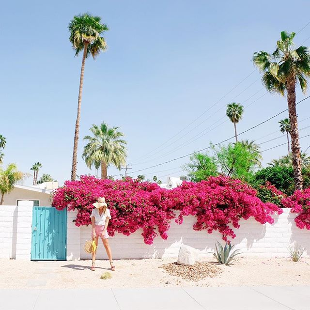 Life is more colorful in Palm Springs 🌴