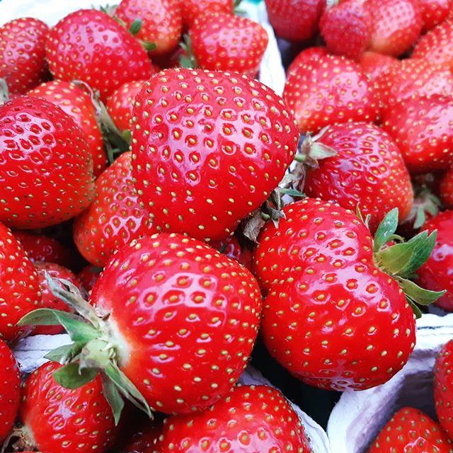 Vi har åpen gårdsbutikk søndag (14th July) fra klokka 12 til 2pm. Vi selgerøkologiske jordbær, sukkererter, salat, hvitløk, squash og nypoteter. Vi sees! #organicfarming #økologisk #strawberryfarmer #jordbær #økogård #renmat #ås #norge #norgetrengerbonden #grønnmat #linnestadgård #økojordbær #dontpanicitsorganic