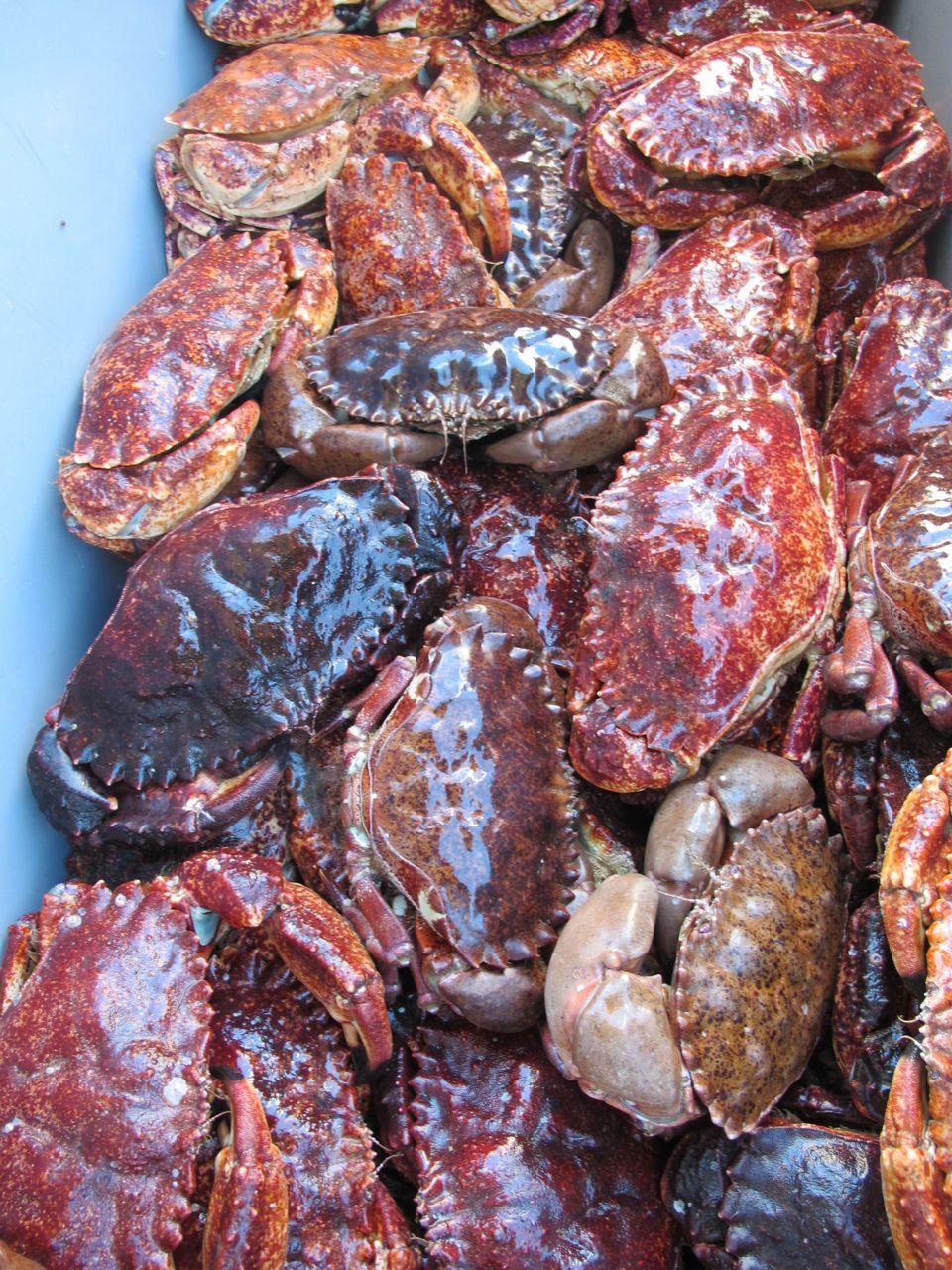 crab IMG_2863.jpg