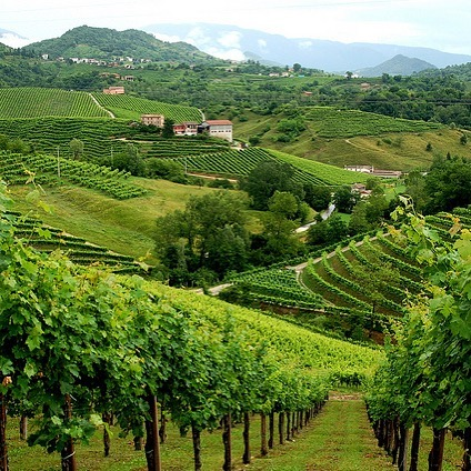 Wine Region Wednesday 🔦: in the rolling hills of the Veneto one can find the DOCG of Conegliano Valdobbiadene Prosecco. Famous for sparkling wines made in many styles, this is considered the spiritual home of Glera. Prosecco is a beloved wine by so many and makes a great Spritz! Apply for our current enrichment trip and see the region first hand in addition to other great Italian wine regions.