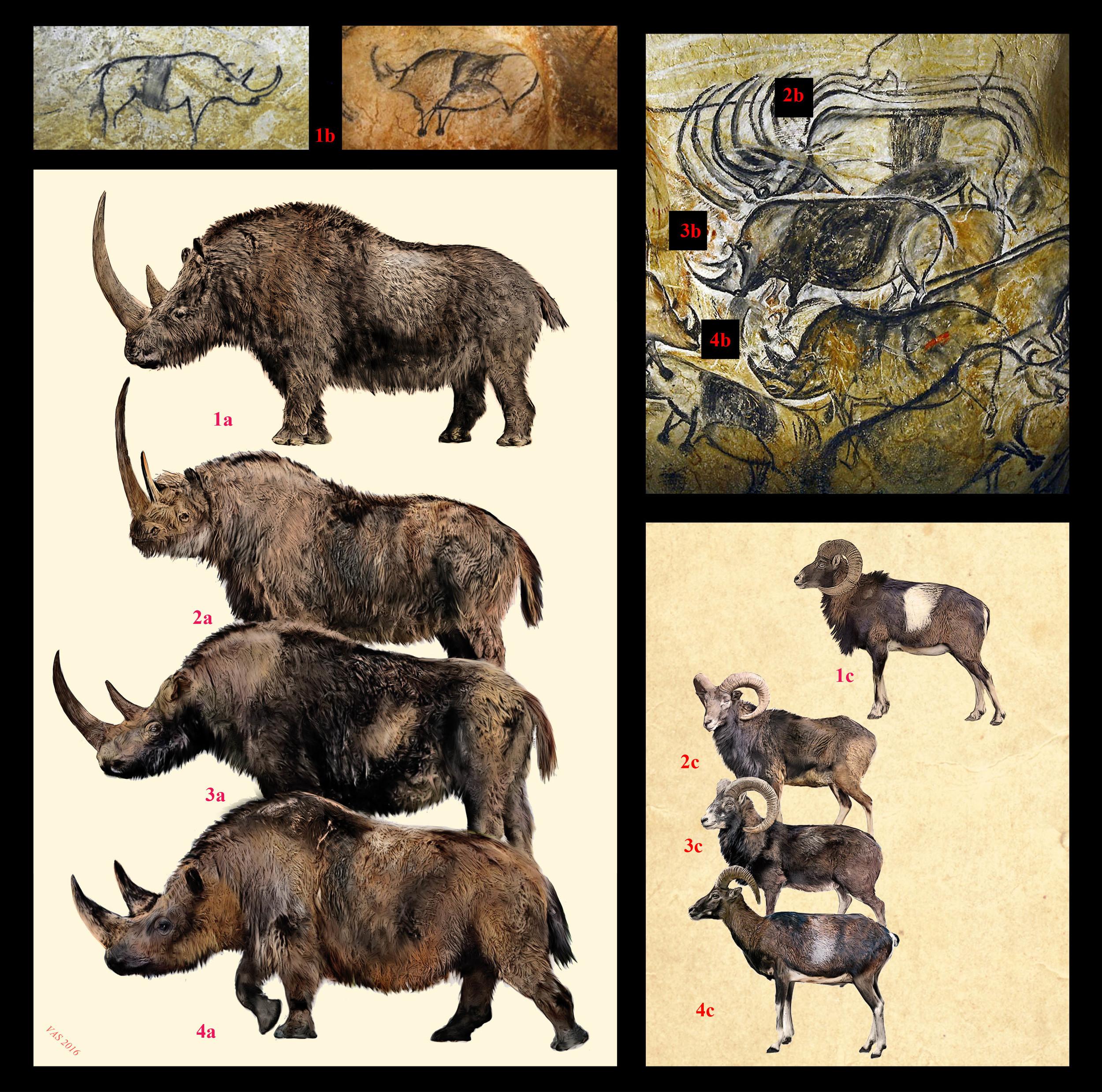 The Woolly Rhinos Of Chauvet The Wild Art Of Velizar Simeonovski