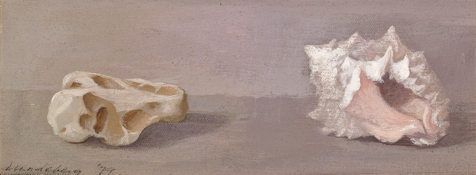 Shell and Rock , 1979  acrylic on canvas 8 x 15 inches; 20.3 x 38.1 centimeters