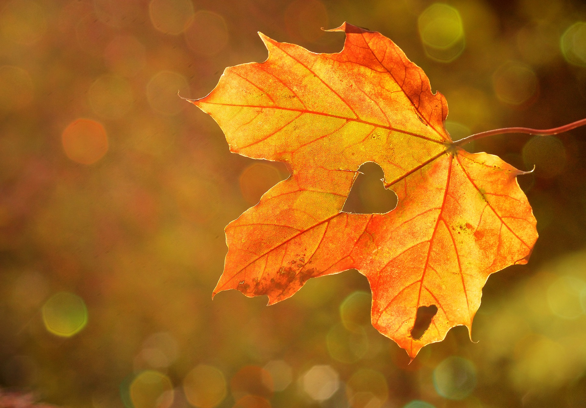 5. Une feuille - A leaf -
