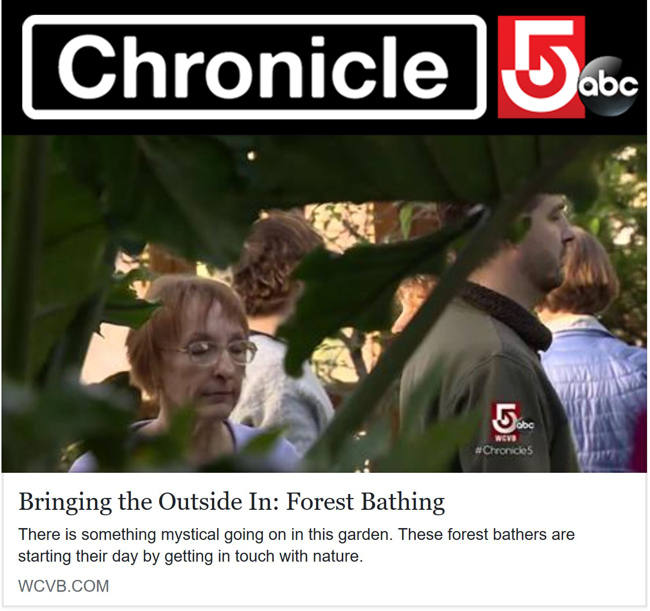 chronicle-Forest Bathing Nadine Mazzola.jpg