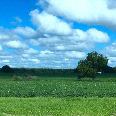 Driving past cotton fields as we approached Dothan