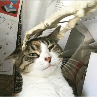 """Sidenote: Kathy is quite the animal lover! By my count, she has at least 2 cats and 3 dogs """"helpering"""" her at home when she quilts!"""