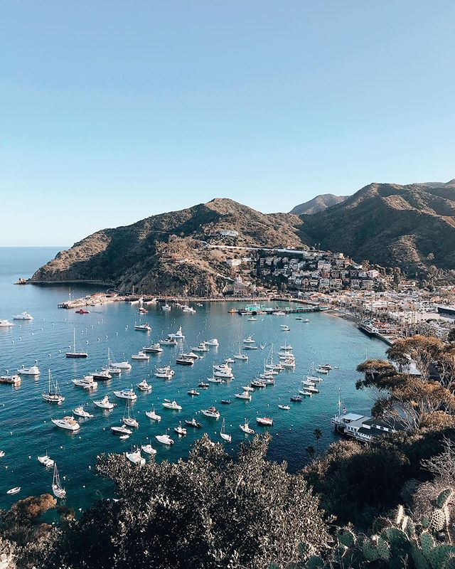 Guys... If you live in southern CA and haven't been to Catalina, do yourself a favor & make a weekend trip here a top priority. For $74 you got yourself a round trip ticket to paradise. . . I also highly recommend renting a golf cart and taking the scenic route around the island. You get endless views and photo ops like this one. . . I can't wait to go back and spend more time here. It felt like a dream 😍