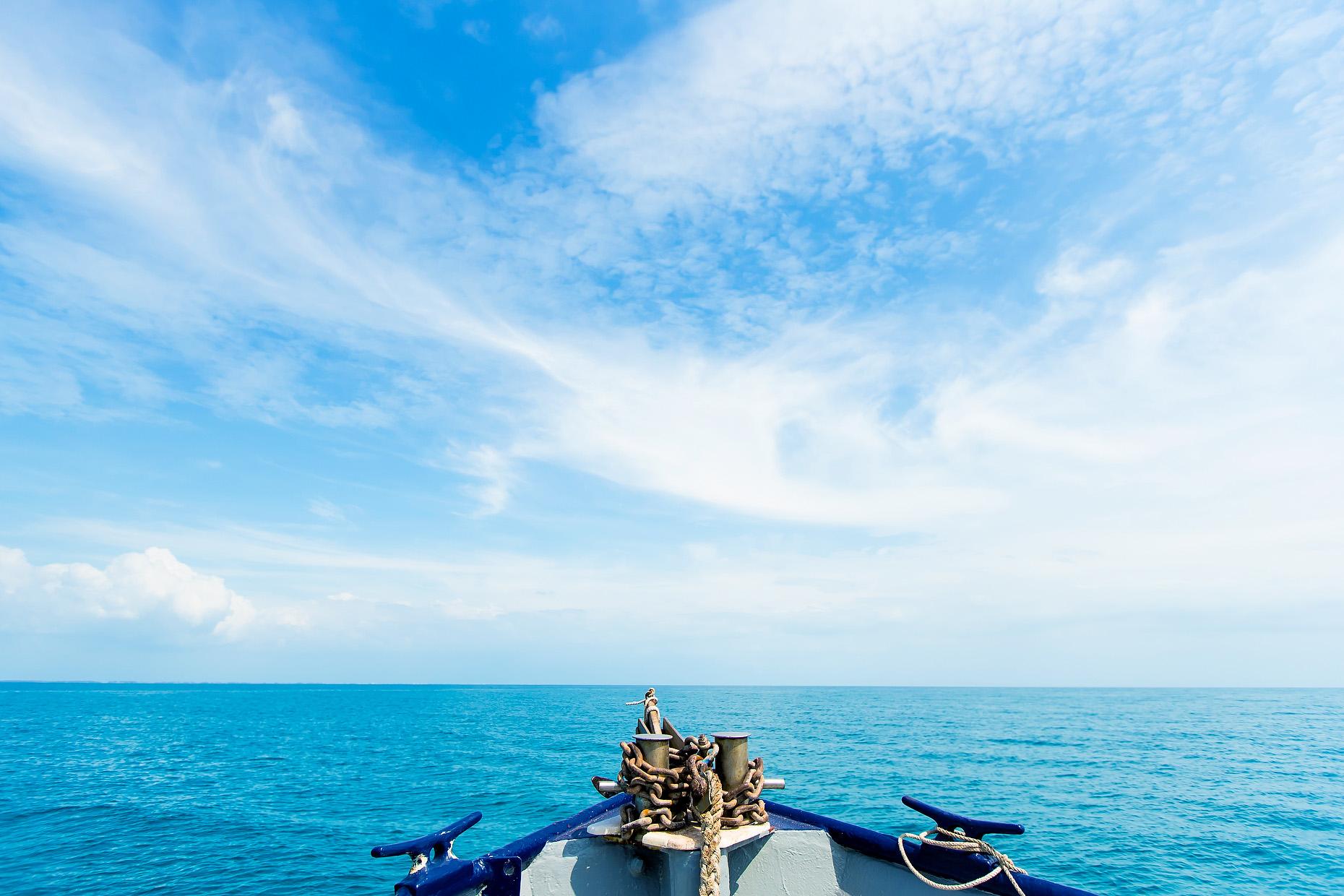 NEW COLLEGE OF FLORIDA SHARK MARINE BIOLOGY 0011.JPG