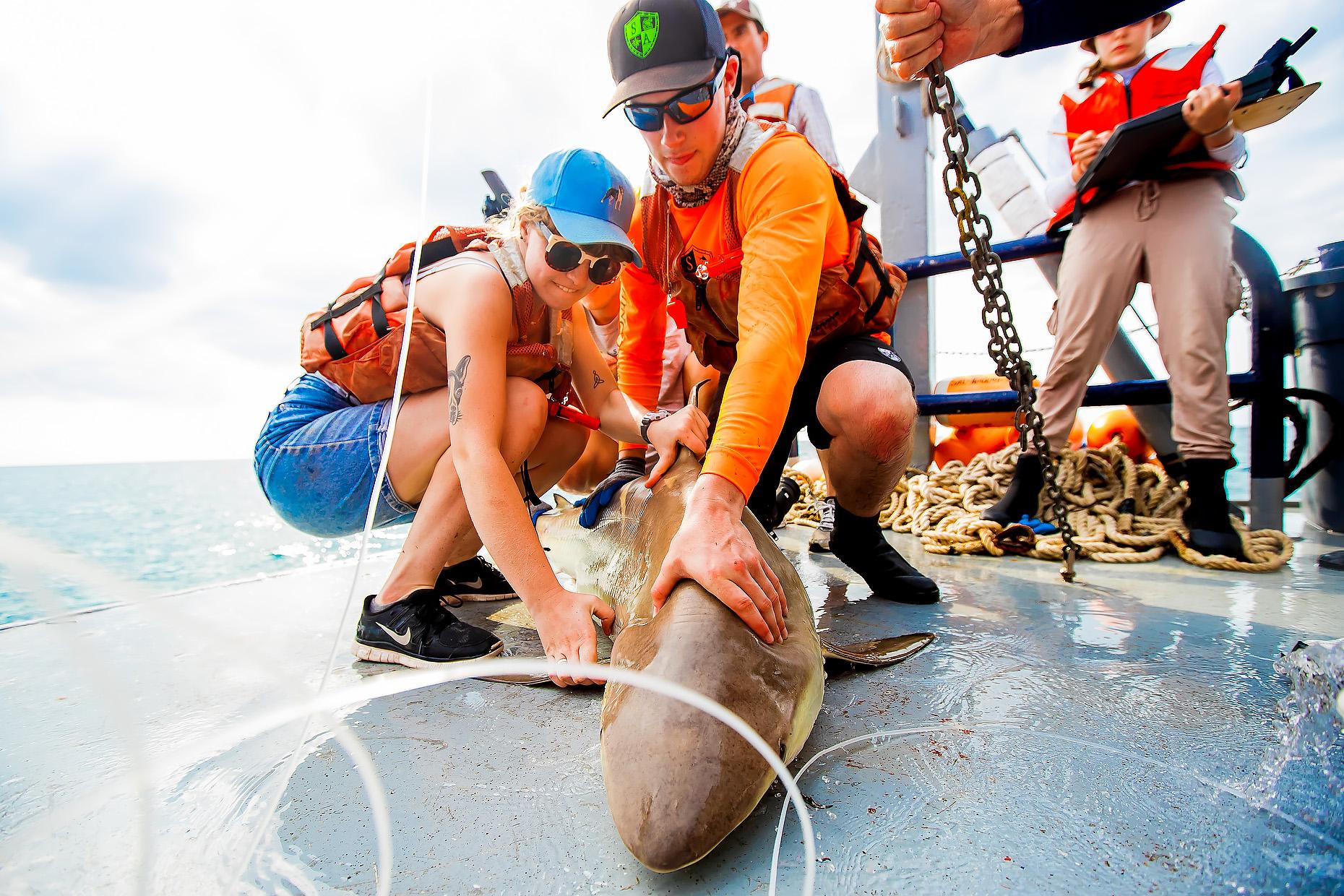 NEW COLLEGE OF FLORIDA SHARK MARINE BIOLOGY 0013.JPG