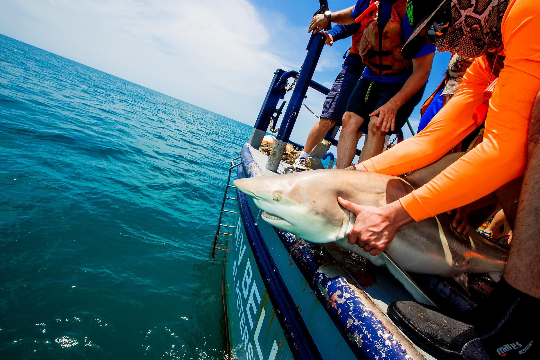 NEW COLLEGE OF FLORIDA SHARK MARINE BIOLOGY 0017.JPG