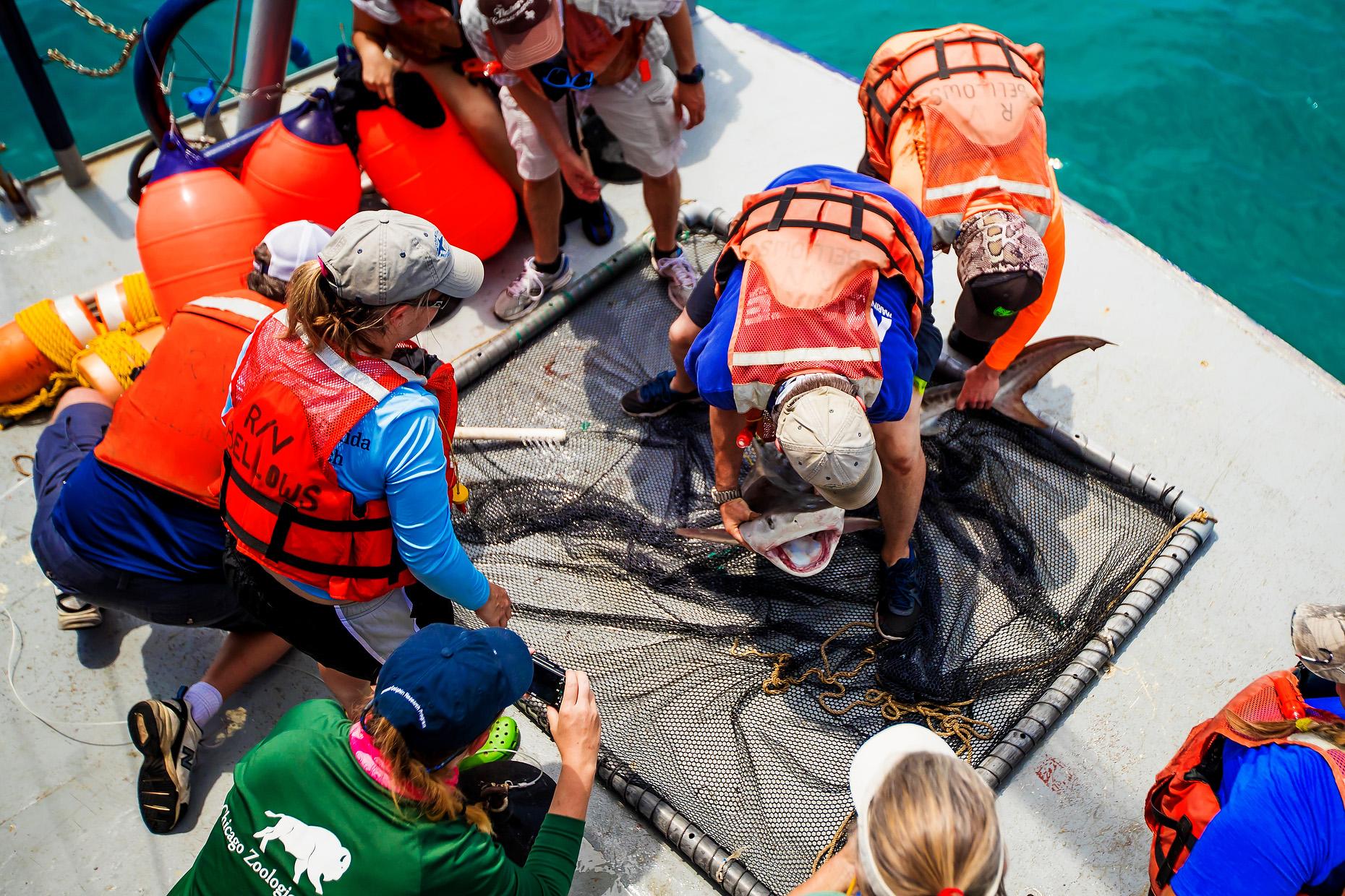 NEW COLLEGE OF FLORIDA SHARK MARINE BIOLOGY 0022.JPG