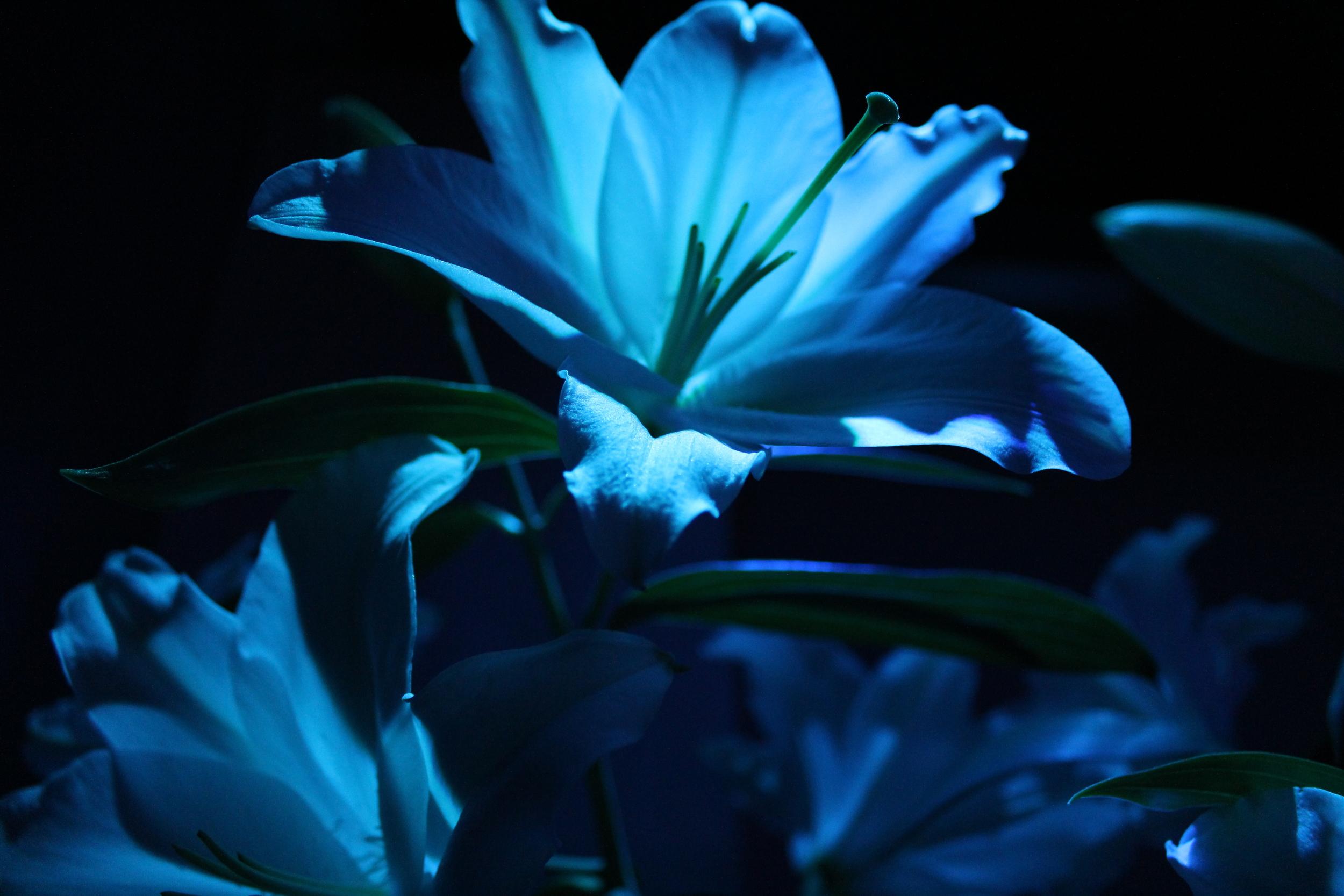 FlowersClose.JPG