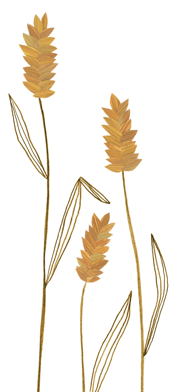 wheat-stems.jpg