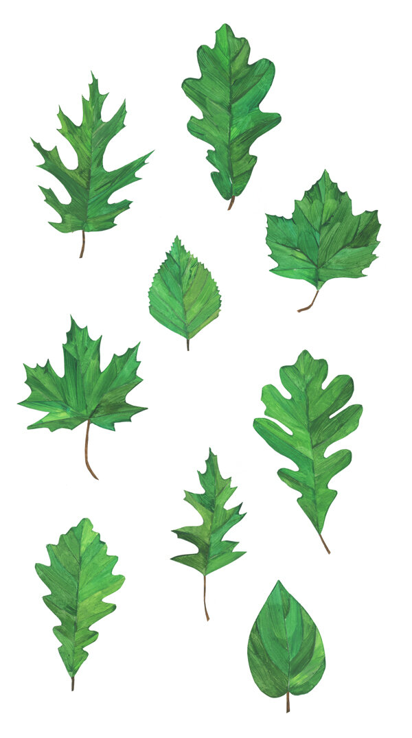 leaves_oak-maple.jpg