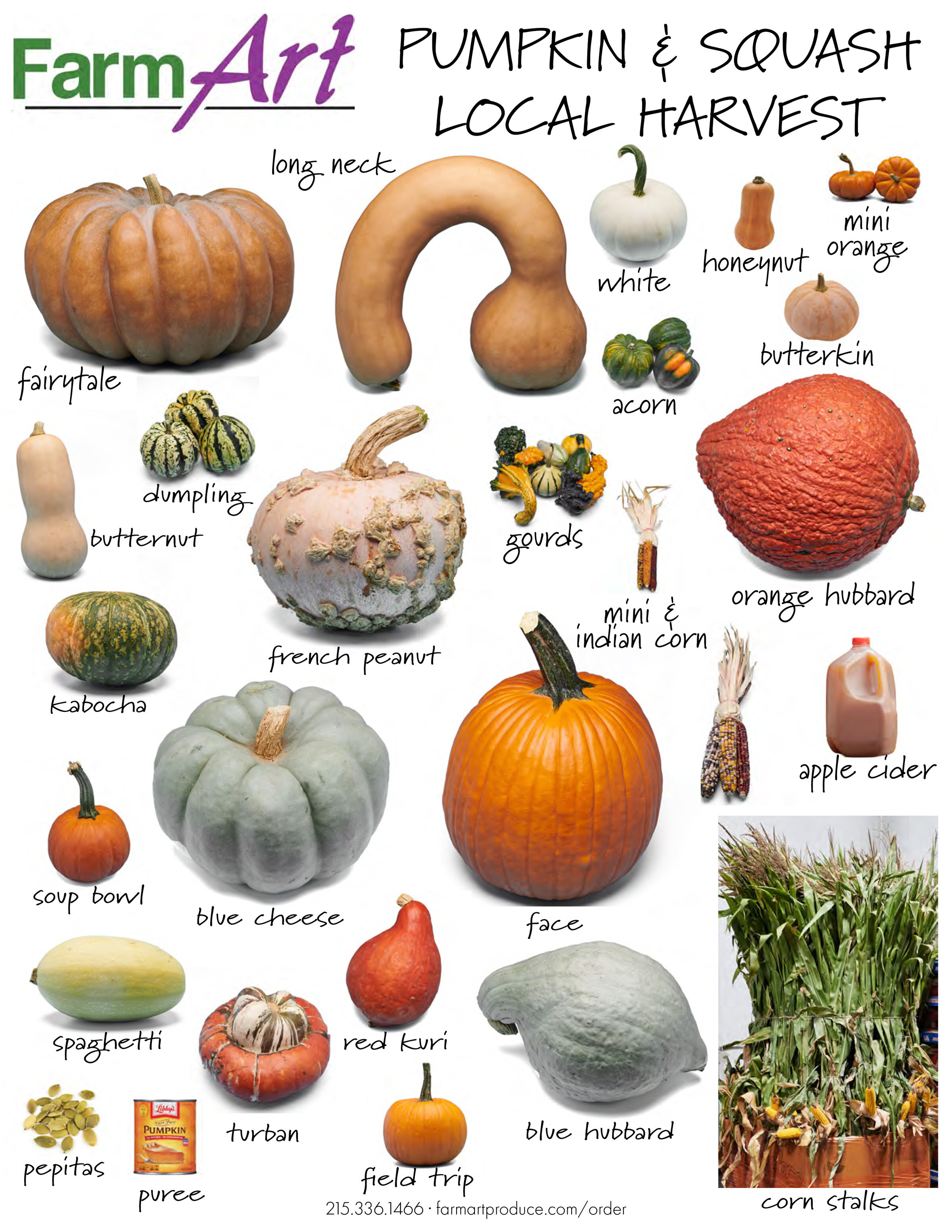 20190918 pumpkin and squash sheet v3small.jpg