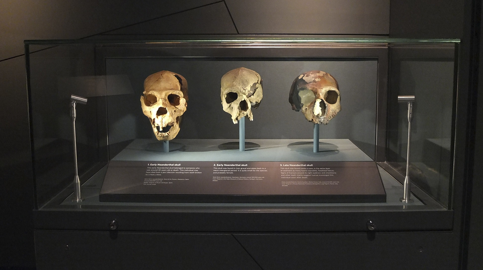 Natural History Museum - Human Evolution