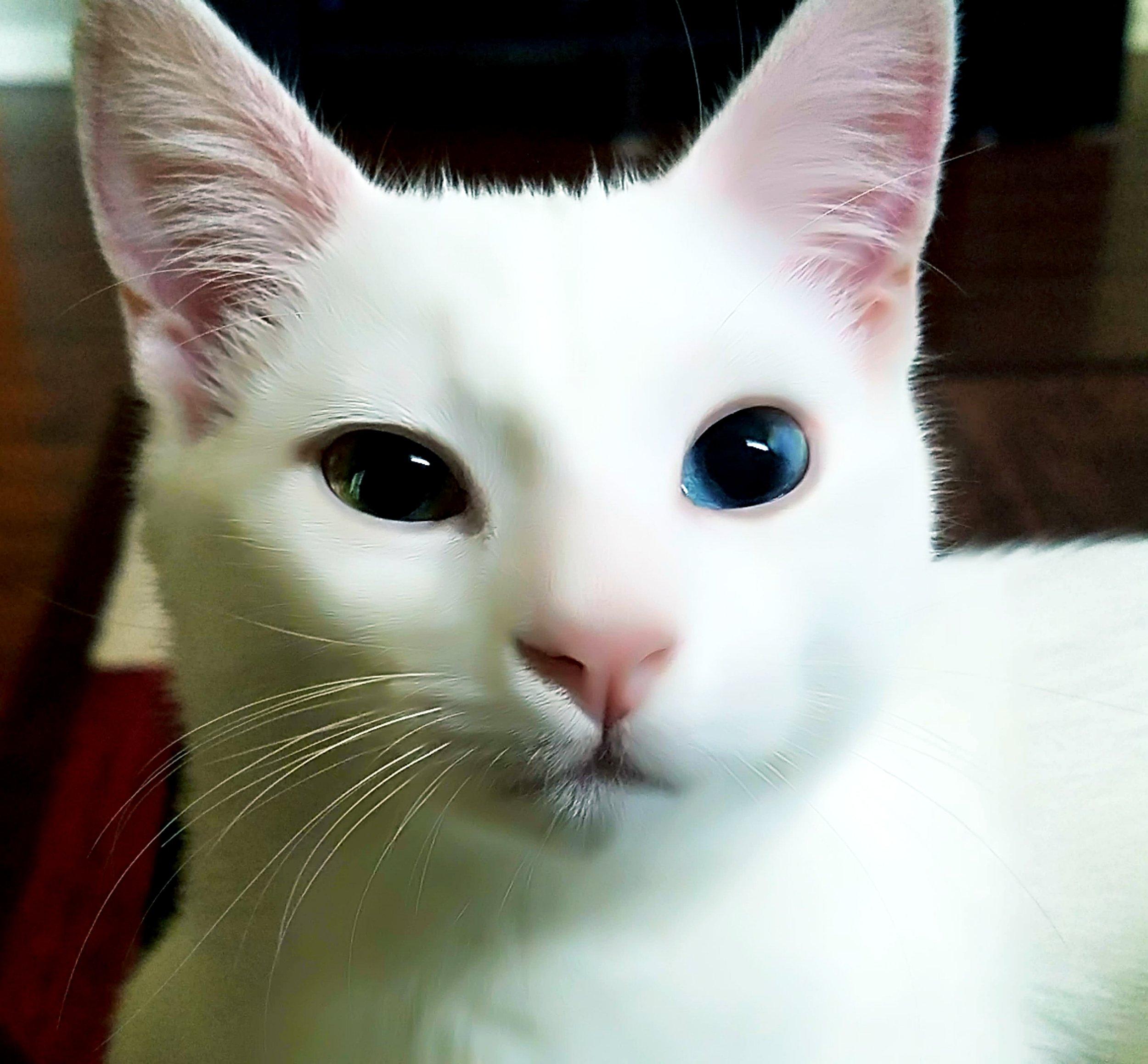 Latte Coffee Kitten.jpg