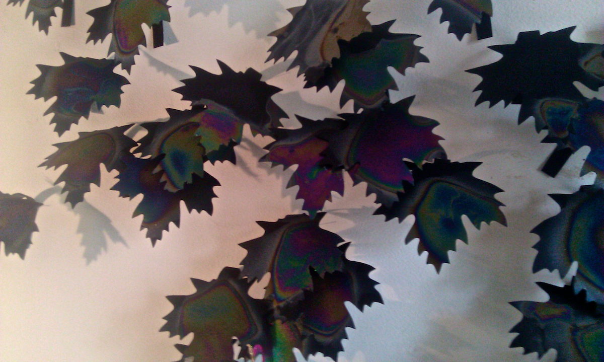 Sugar Maple Leaves (installation view)
