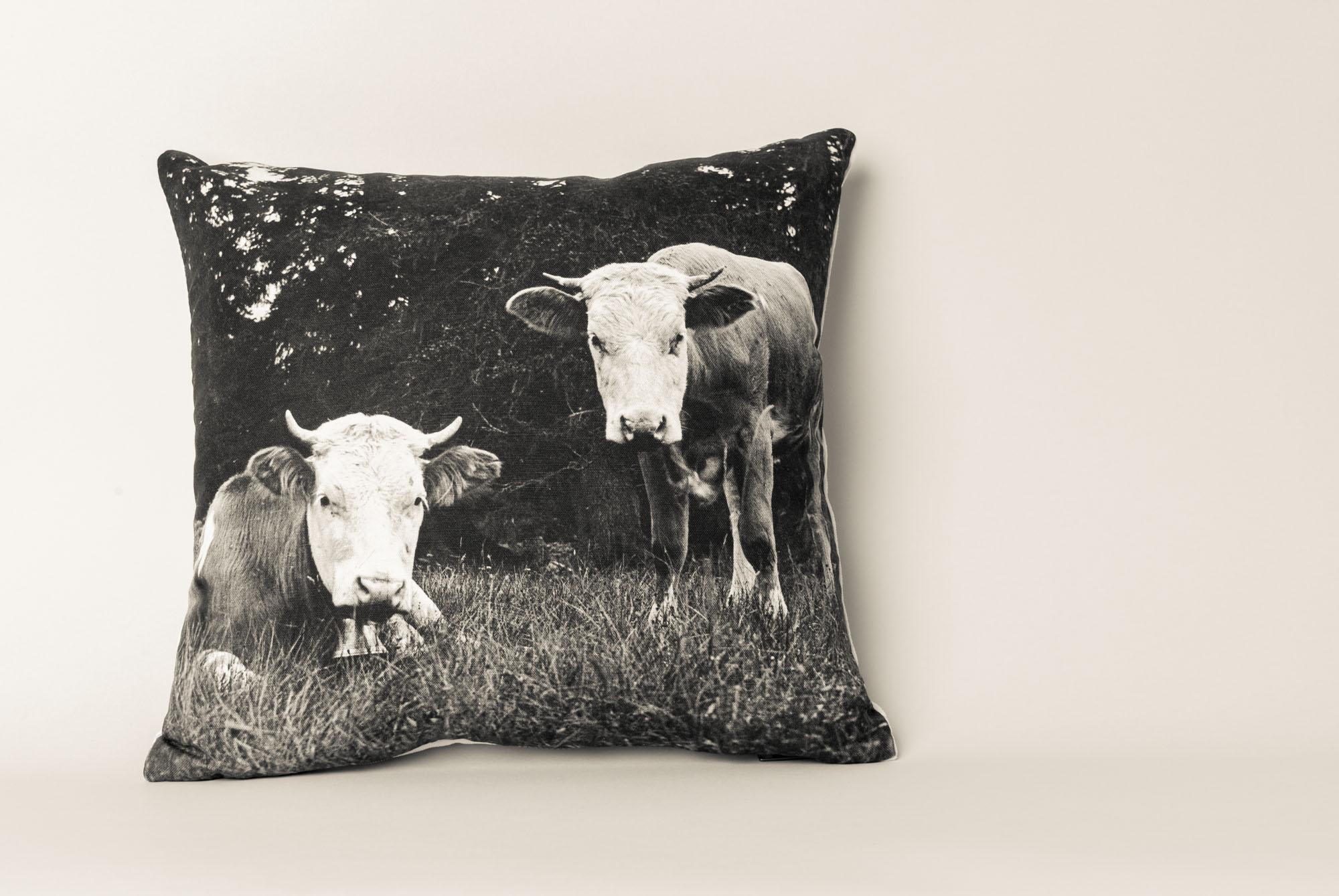 Cows, Switzerland, 1923