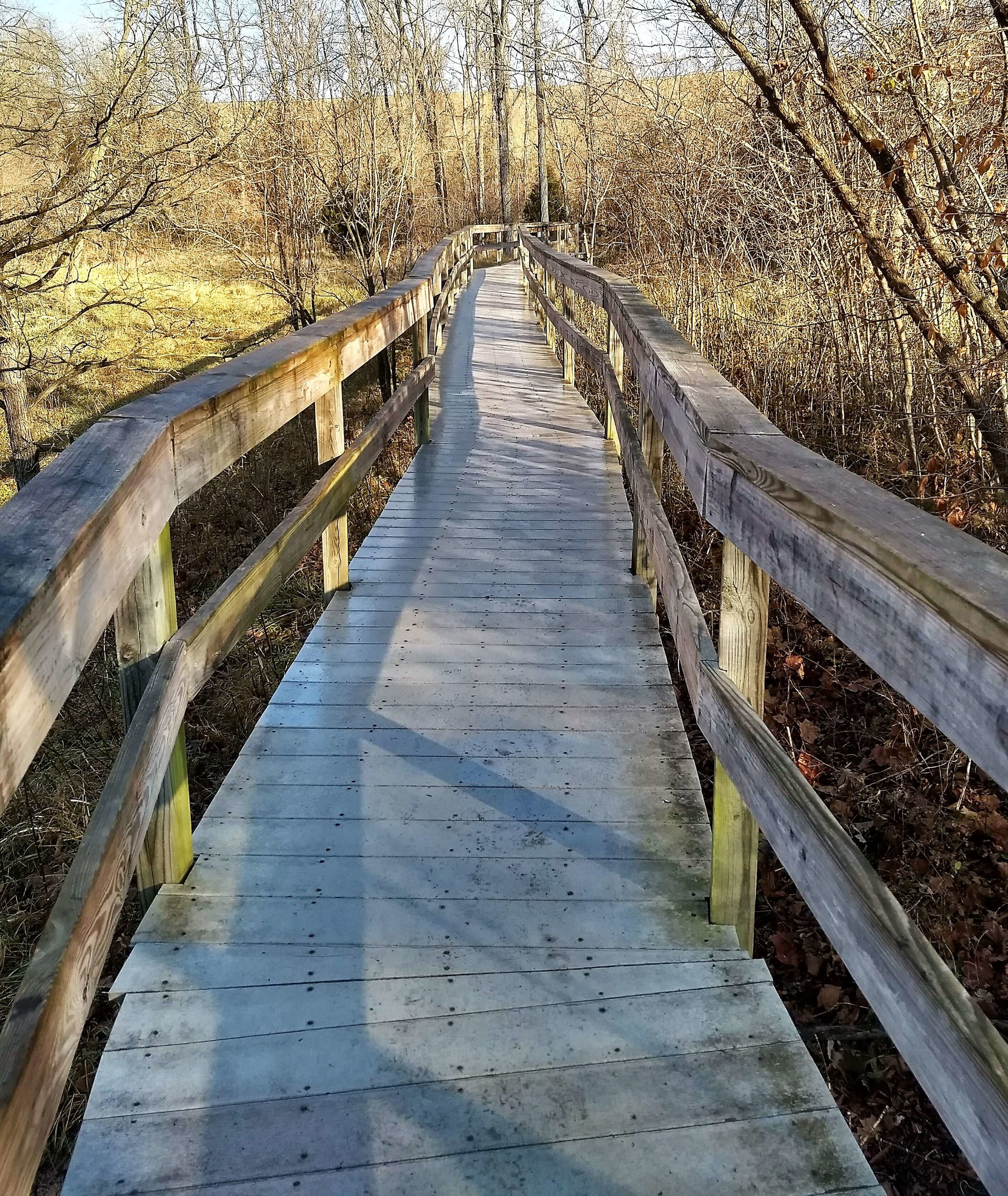 Bridge over grassy lowlands in the park. At the right time of day deer are close enough to touch.
