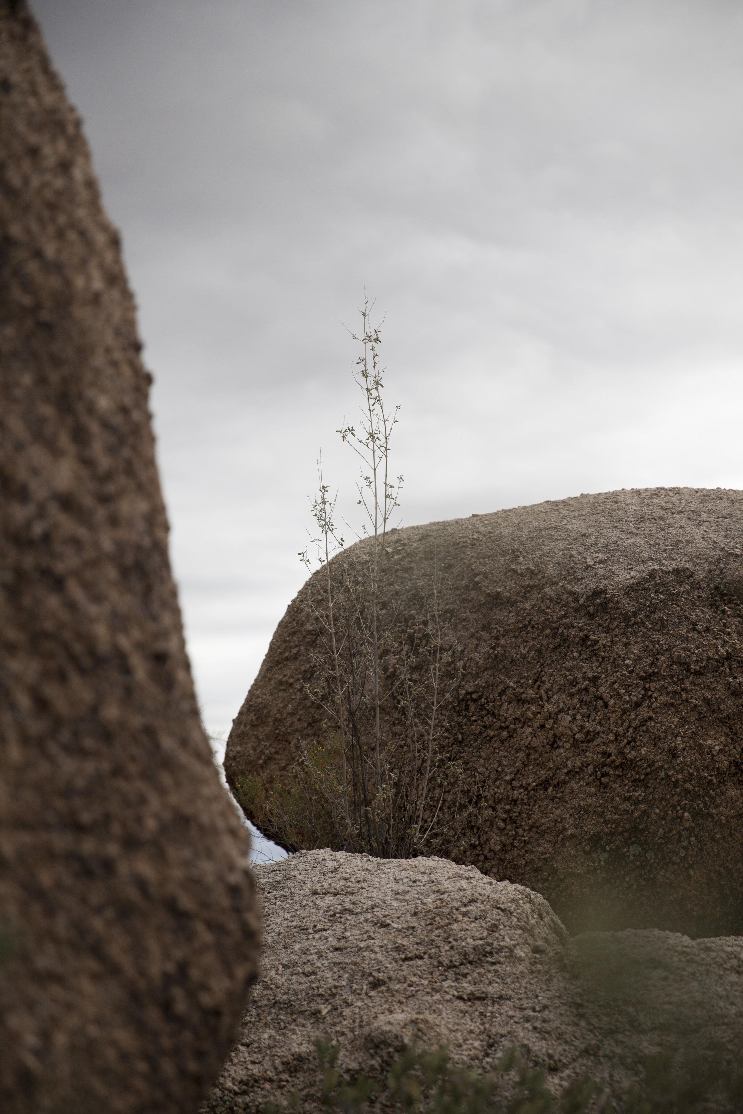 landscape_MG_3190.jpg