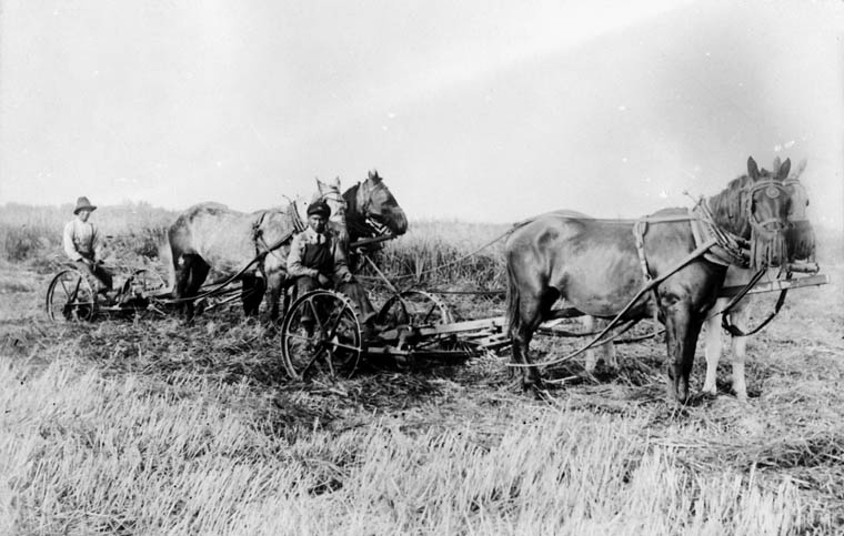A05:   St. Michael's Indian Residential School, two boys cutting hay with two teams of horses, Duck Lake, unknown date