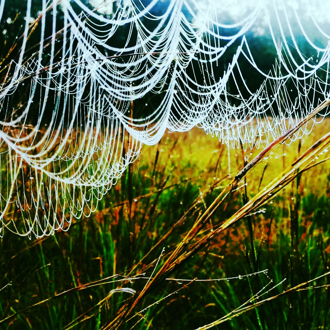 Meadow Web