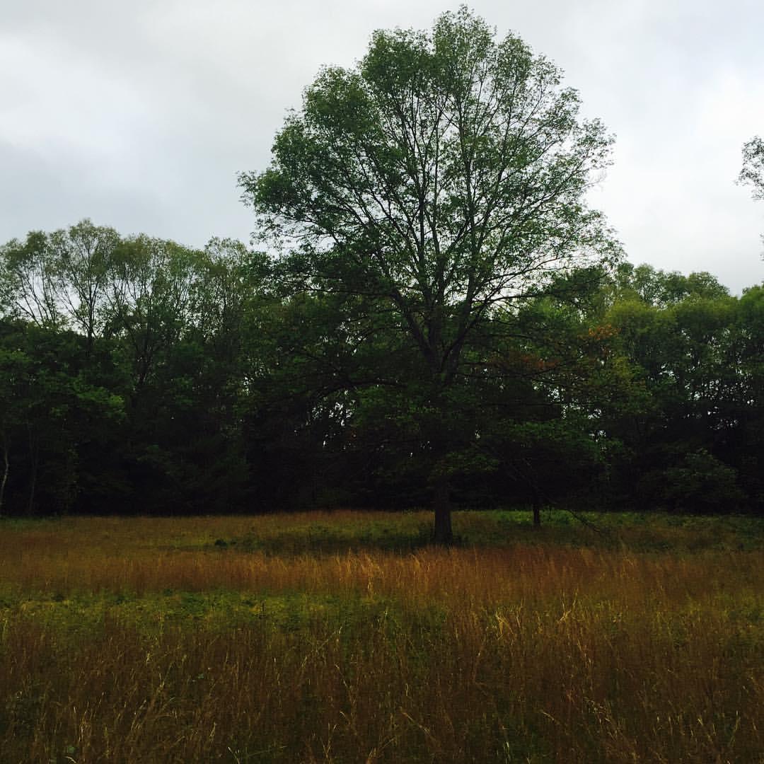 Meadow, Autumn Morning