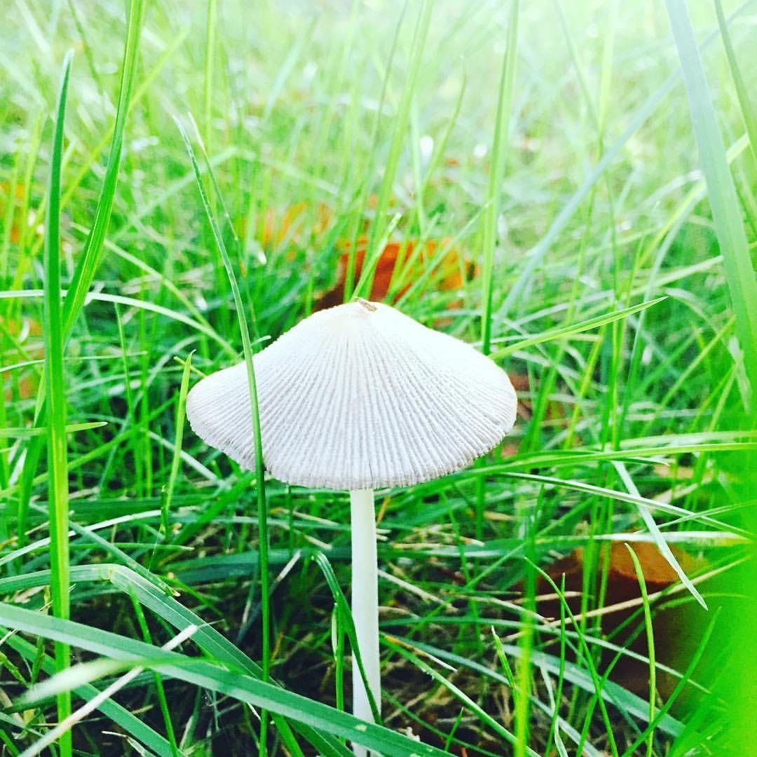 Umbrella, Parasola