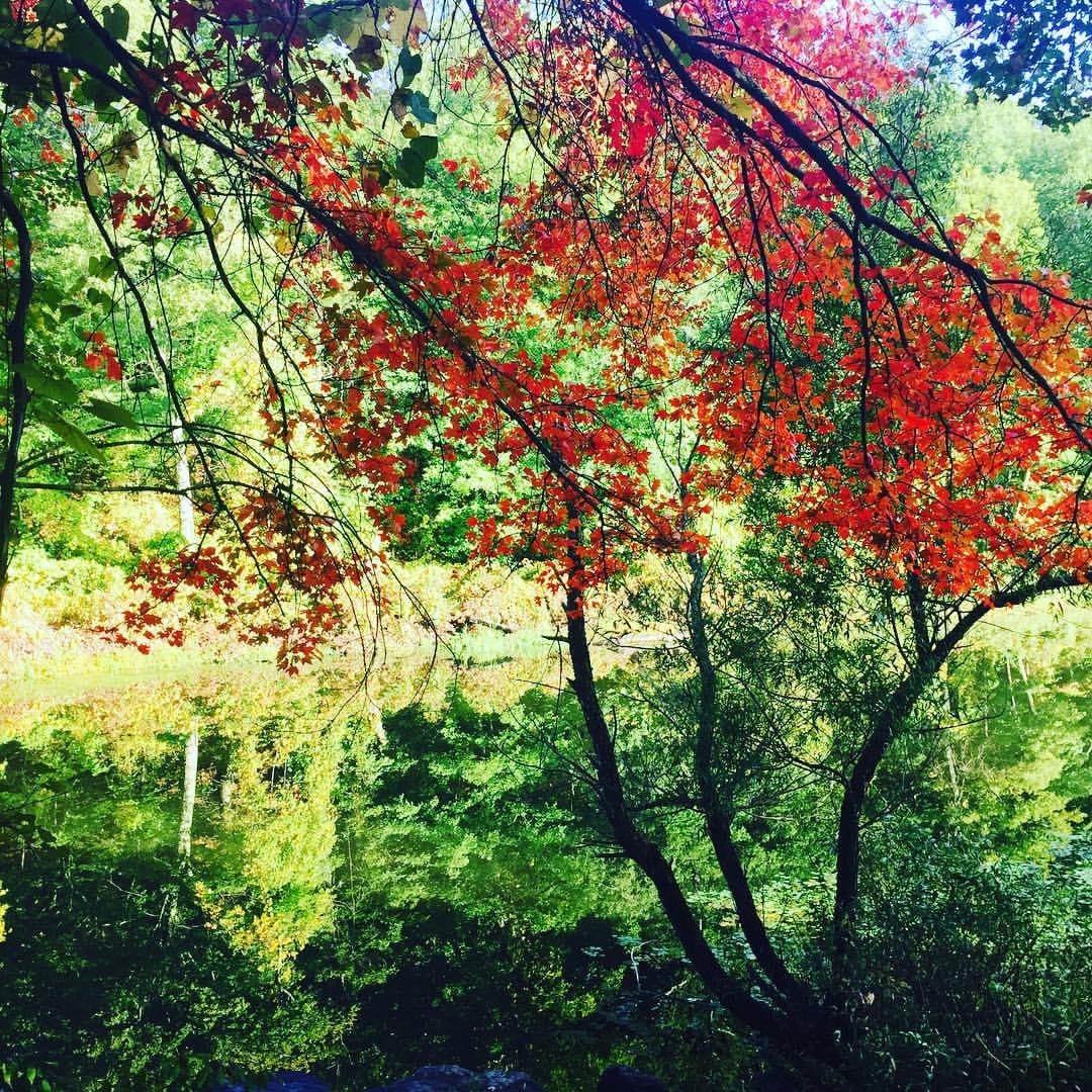 Charles River, Autumn