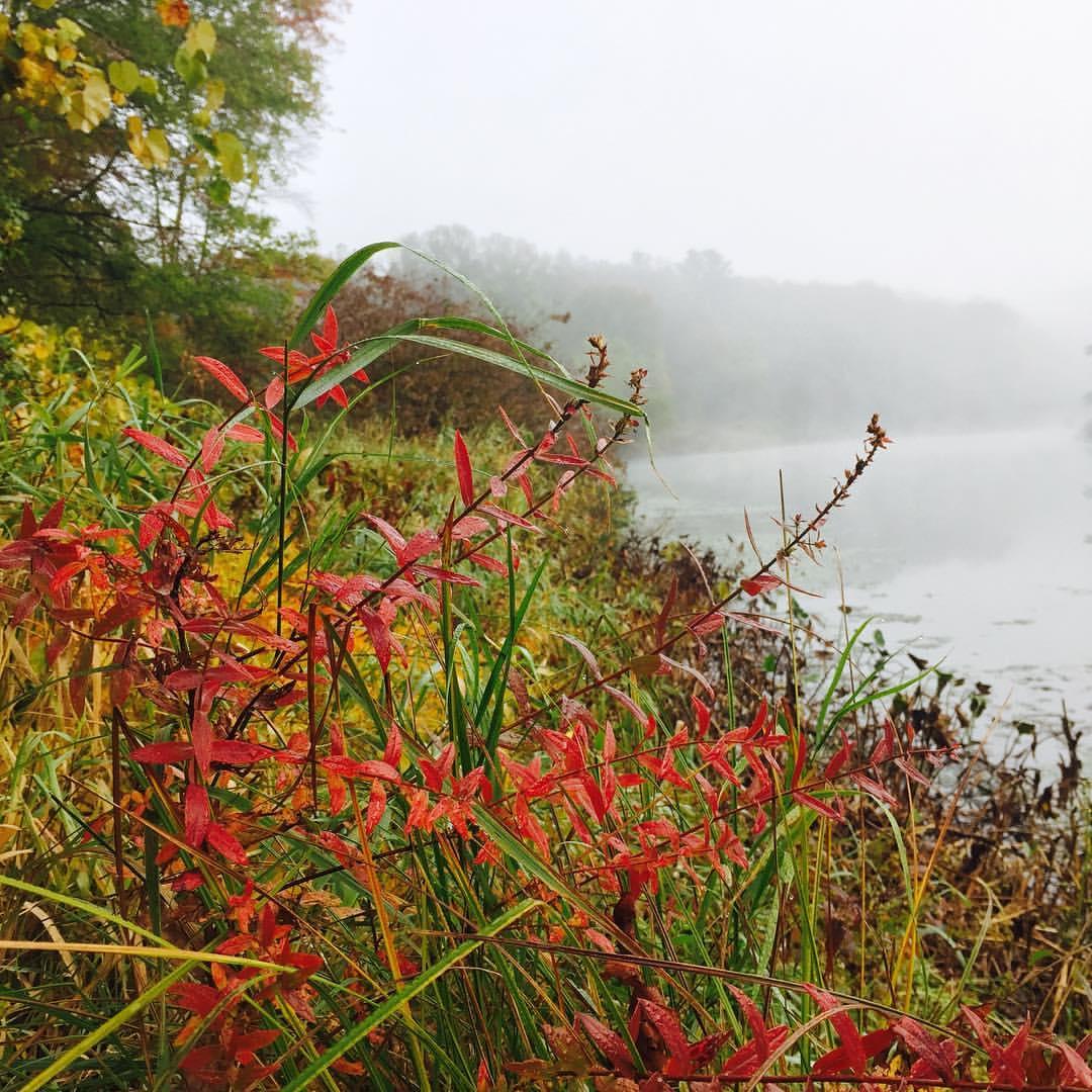 Fall Foliage, Charles River View