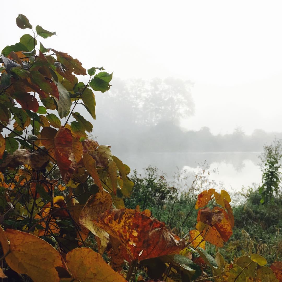 Charles River View, Foliage