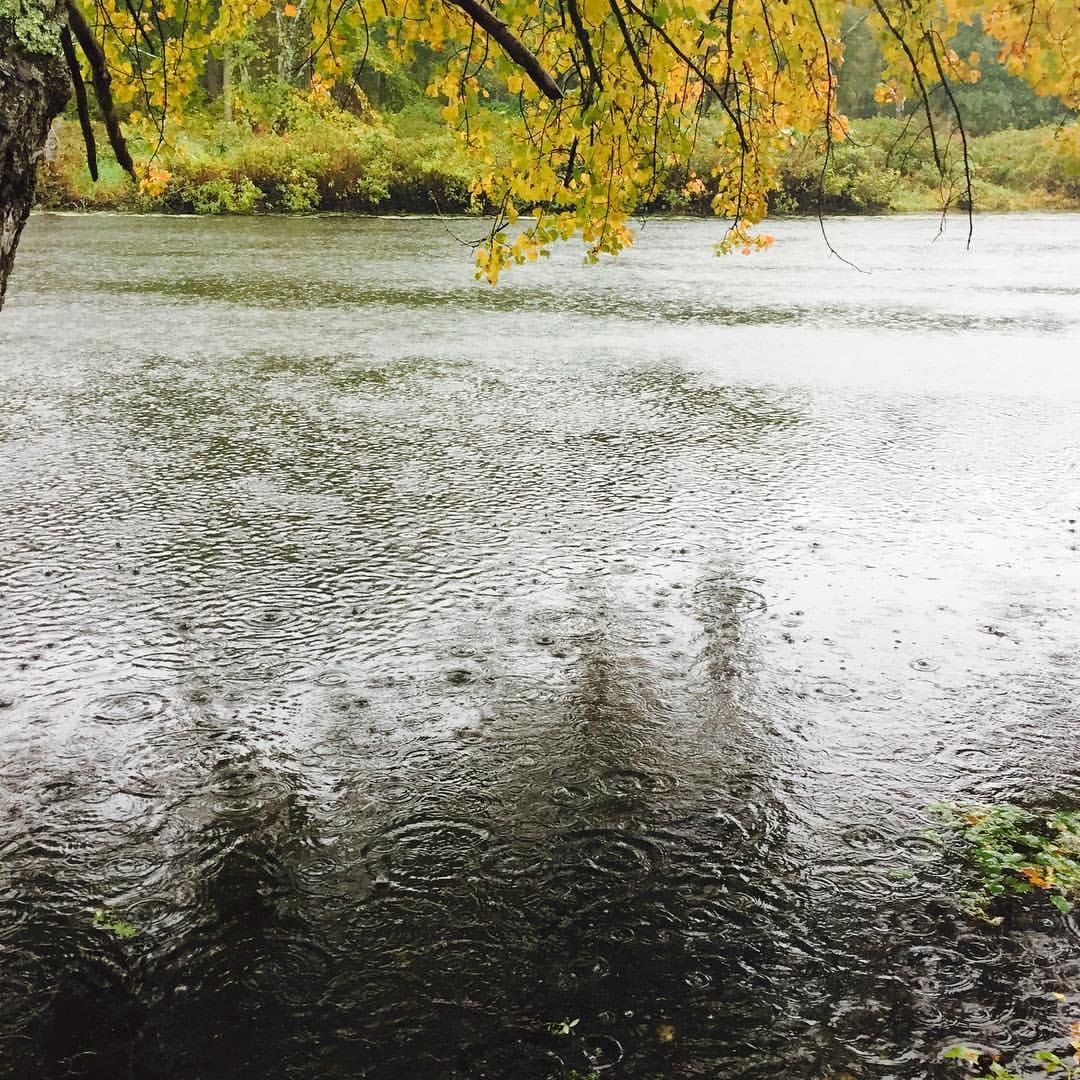 Autumn Rainy Charles River