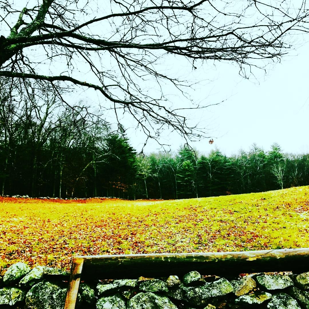 Rainy meadow morning