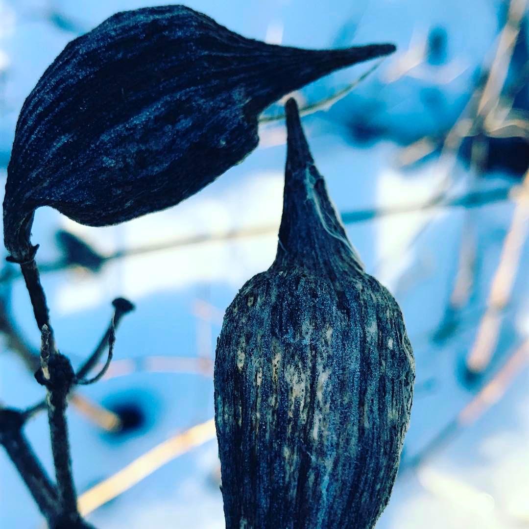 milkweed birds.jpg