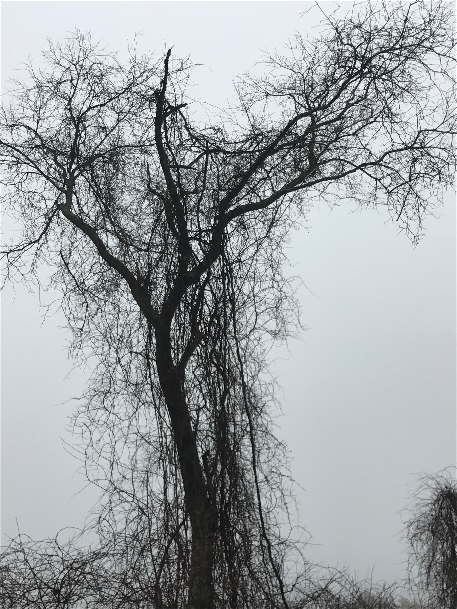 A Meadow, A Tree