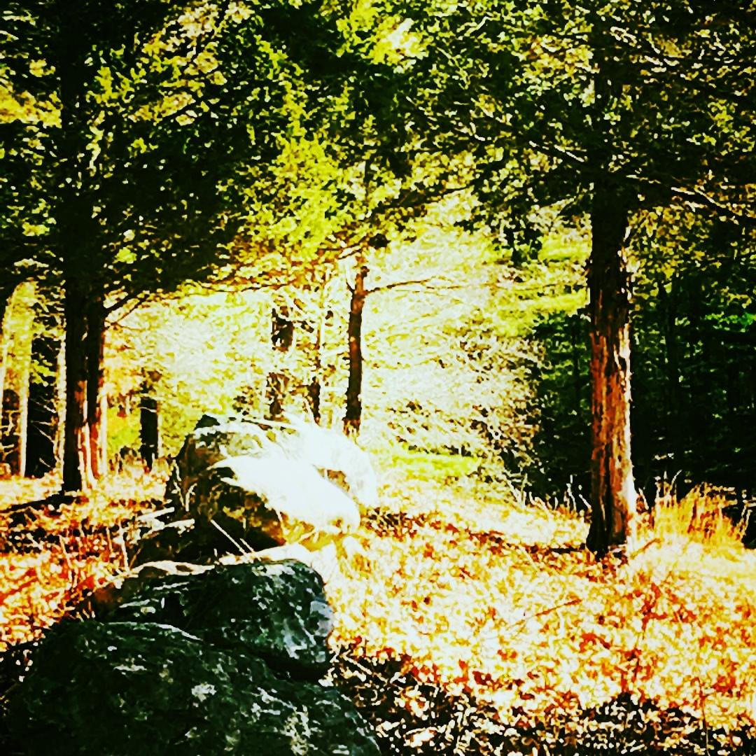 stone wall trees.jpg