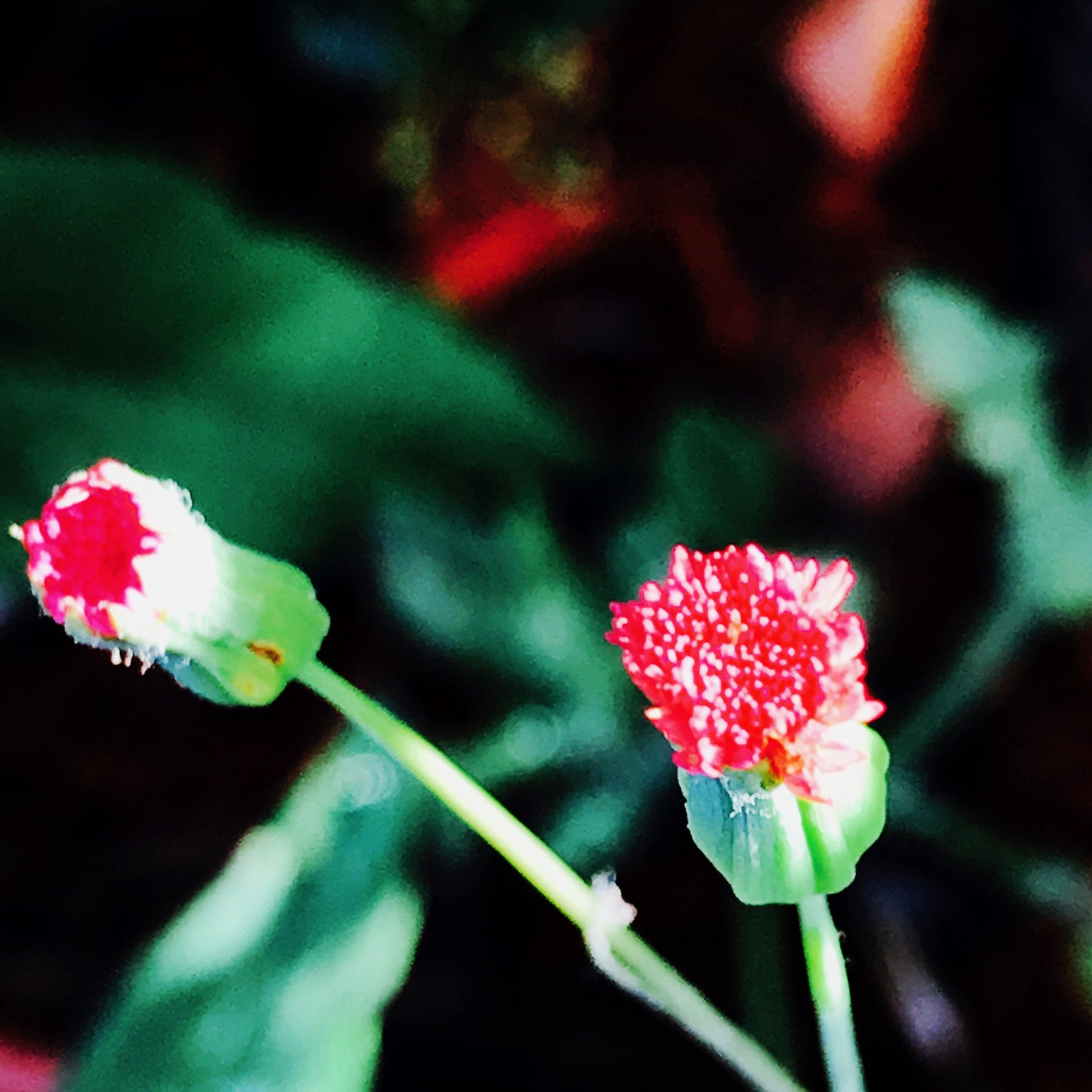 tiny bloom.JPG