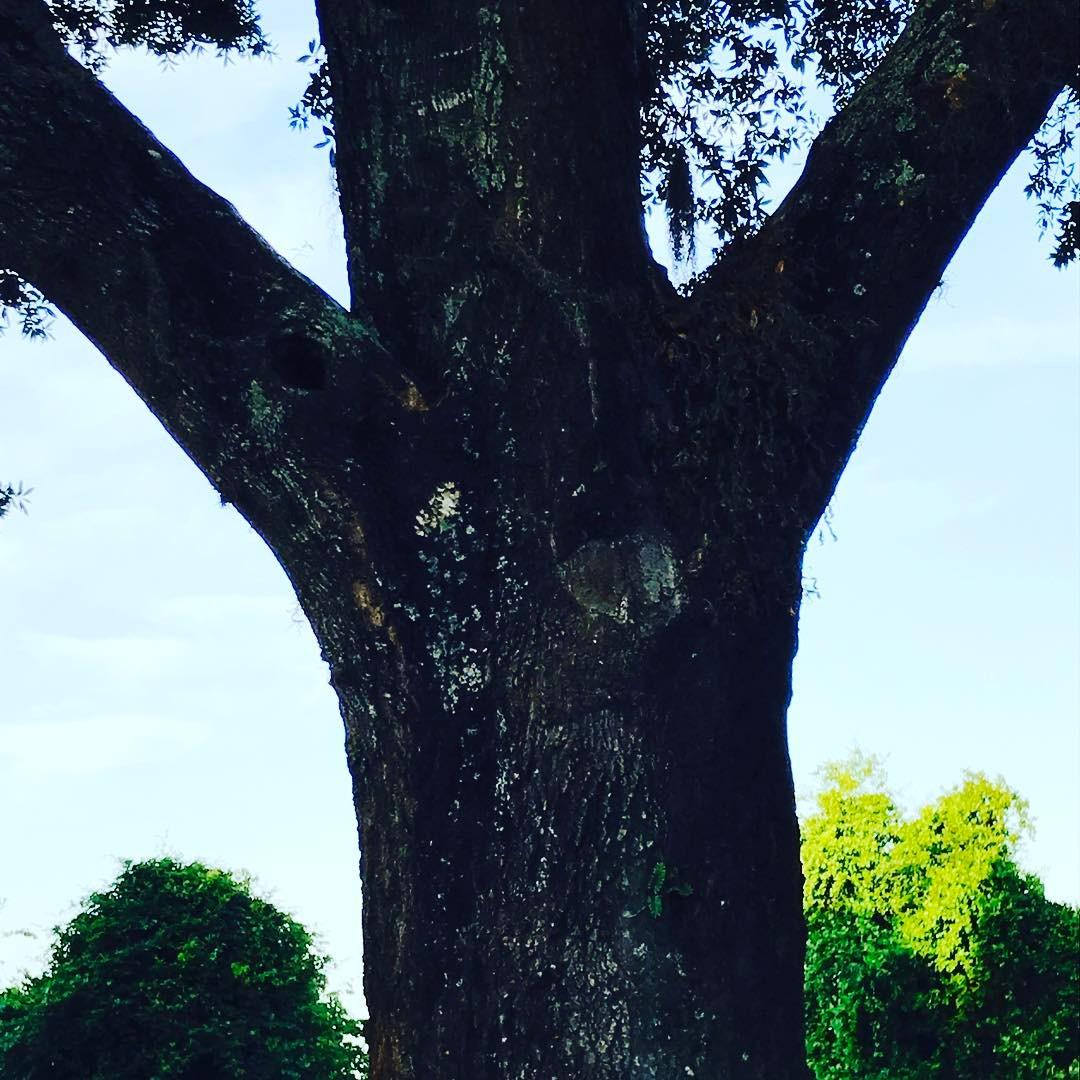 tree arms.jpg
