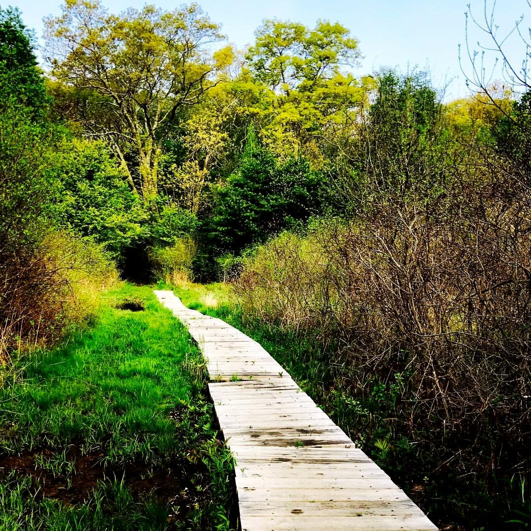 Footbridge in marsh