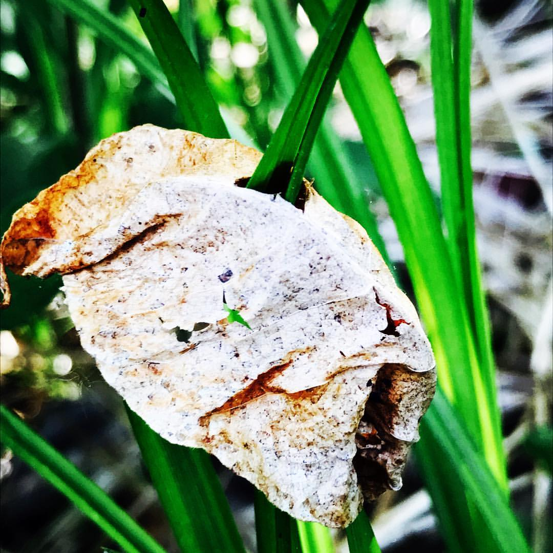 leaf in grass.jpg