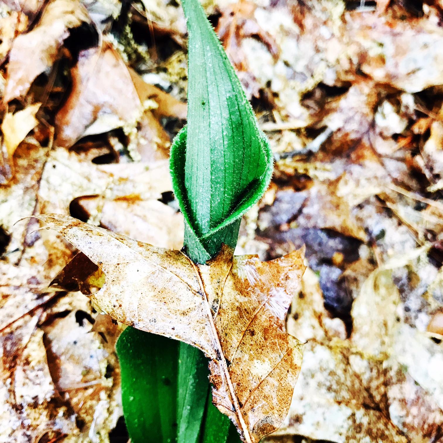 lady in leaf.JPG