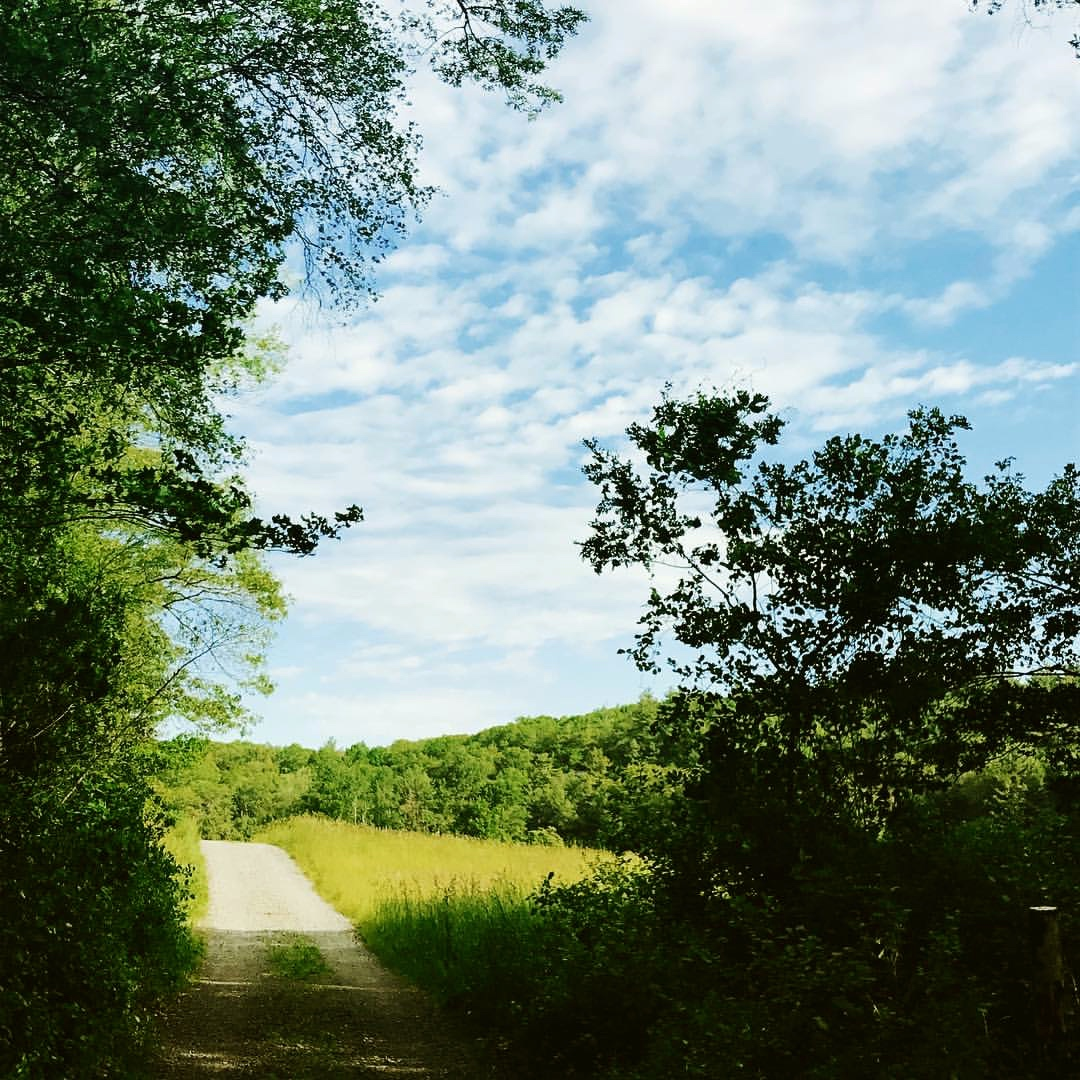 Blue meadow.jpg