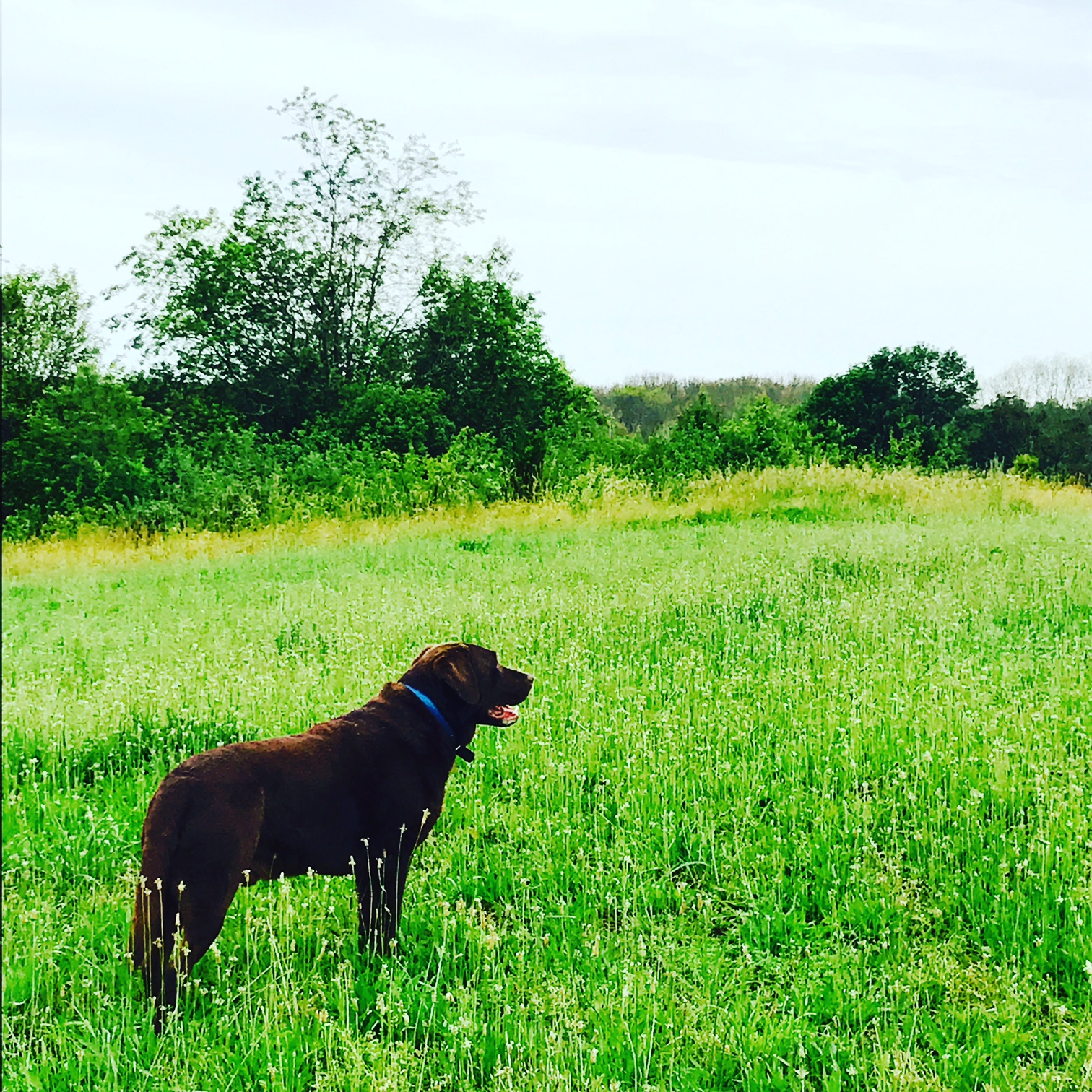 Charlie in the Meadow