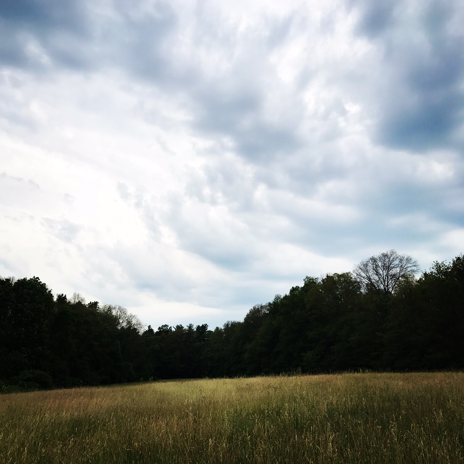 Meadow Clouds