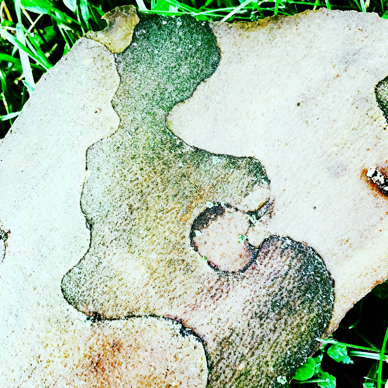 Woman in Tree Bark, (Image taken on Saturday, Cedar Creek Park)