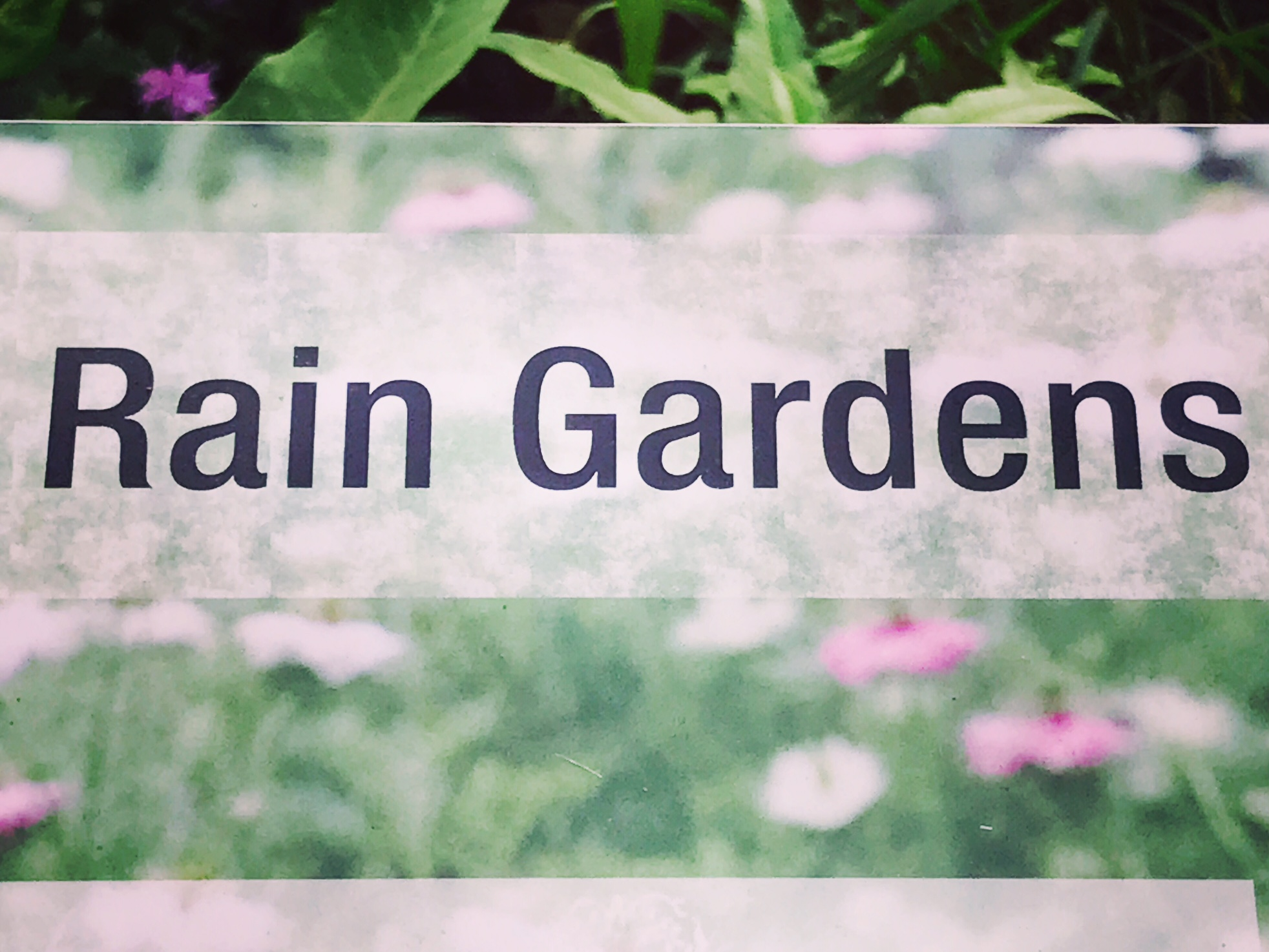 rain garden.JPG
