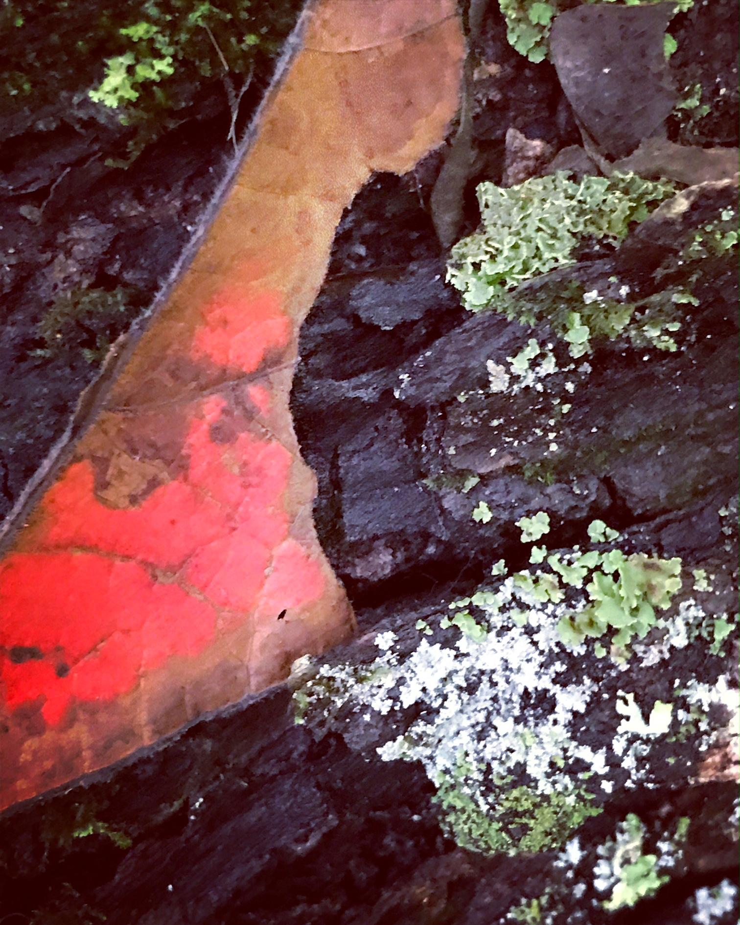 red bark.JPG