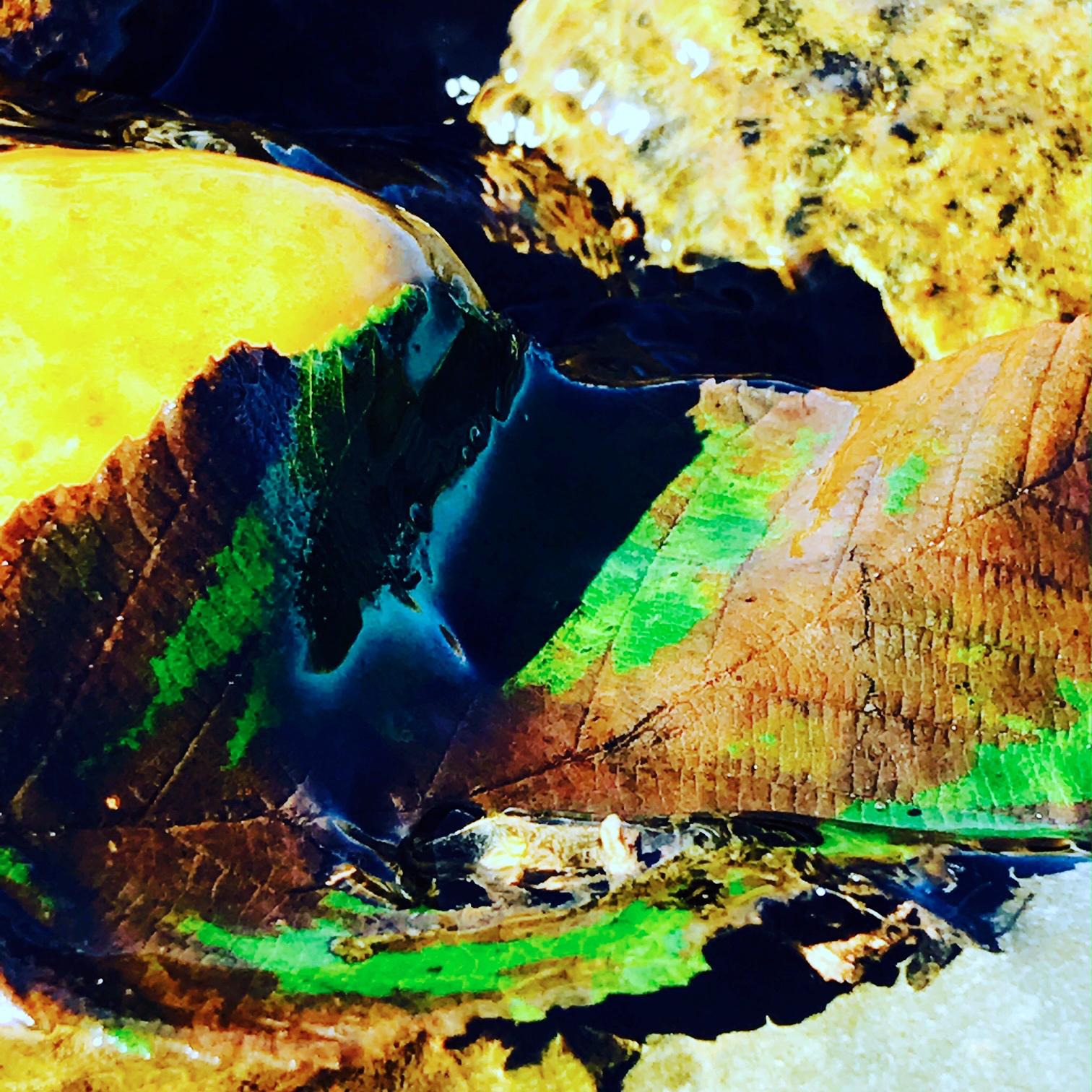 Leaf, Freshwater Brook, Menemsha